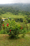 Scenic view in Arenal Royalty Free Stock Images