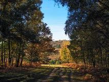 Scenic View of the Ashdown Forest royalty free stock photography