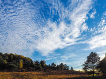 Scenic View of the Ashdown Forest. In Sussex Royalty Free Stock Photo