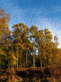 Scenic View of the Ashdown Forest. In Sussex Stock Image