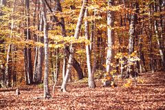 Scenic view of autumn landscape. Beautiful autumn forest royalty free stock images