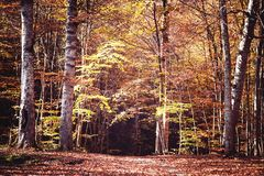 Scenic view of autumn landscape. Beautiful autumn forest royalty free stock image