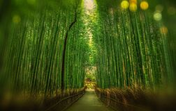Scenic View of Bamboo Trees Royalty Free Stock Photography