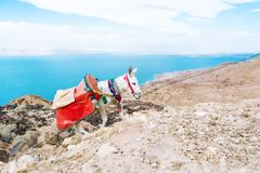 Scenic view of beautiful Dead Sea and a white donkey rising to mountains, Jordan stock images