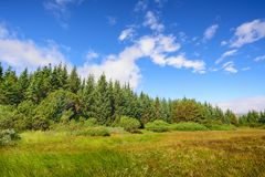 Scenic view of beautiful green tree with blue sky, Iceland Stock Photos