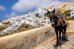 Scenic view of beautiful Oia village and donkey, Santorini Royalty Free Stock Images