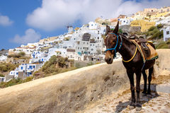 Scenic view of beautiful Oia village and donkey, Santorini Stock Image
