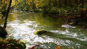 Scenic view of beautiful Oirase River flowing in the forest