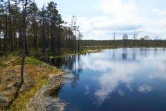 Scenic view of the big bog lake waterside in Estonia Stock Photos