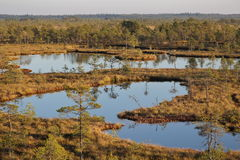 Bogs, mires, marsh water, pine trees, study trail. Bog walking and hiking. Estonian nature landscape. Stock Images