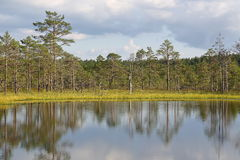 Bogs, mires, marsh water, pine trees, study trail. Bog walking and hiking. Estonian nature landscape. Stock Image