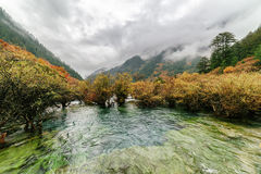 Scenic view of the Bonsai Shoals, Jiuzhai Valley National Park Royalty Free Stock Photos