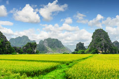 Scenic view of bright green rice fields among karst mountains royalty free stock photos
