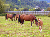 Horses grazing in field stock photos