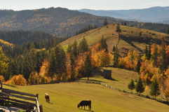 Scenic view in Bucovina Royalty Free Stock Images