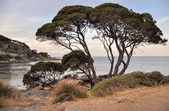 Scenic View in Bunker Bay Stock Photography