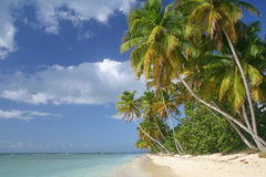A scenic view of the caribbean beach Stock Images