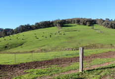 Scenic view of Collie River valley rural paddocks Western Australia. Stock Image