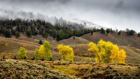 Scenic View of the Countryside in Yellowstone National Park Stock Images