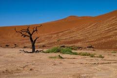 Scenic view at Deadvlei, Sossusvlei. Namib-Naukluft National Park, Namibia stock photos