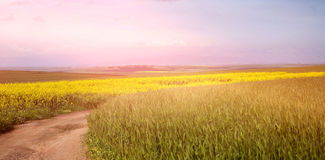 Scenic view of empty path passing through fields Royalty Free Stock Photography