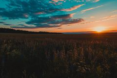 Scenic View of the Field During Sunset Stock Photo