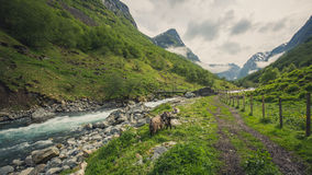 Scenic view of the fjord, photo taken from the Undredal land. Summer in Norway. Scenic view of the fjord, photo taken from the Undredal land Stock Photography