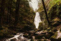 Scenic View of Forest Stock Photos