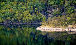Scenic View of the Forest Royalty Free Stock Image