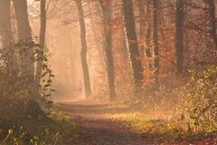 Scenic View of Forest Stock Images