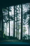 Scenic View of Forest From Car stock photography