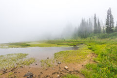 Scenic view of the forest,meadow and lake with fog on the day in Tipzoo lake,mt Rainier,Washington,USA.. Stock Image