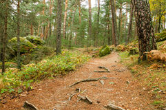 Scenic view of a forest path in Boca del Asno natural park on a rainy day in Segovia, Spain. Stock Photos