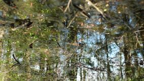 Scenic view forest in spring reflected in water. Scenic view forest in spring, reflected in water, abstract background, сamera in motion stock video