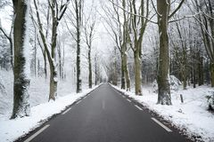 Scenic View of the Forest during Winter Stock Image