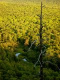 Scenic view of the forest in Wisconsin. Landscape of deciduous green forest in Wisconsin during summer stock image