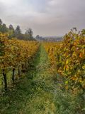 Scenic view of the freshly harvested grape fields in autumn in Friuli Venezia Giulia. Veneto is in the north eastern part of Italian peninsula, between Alps and stock image