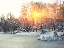 Scenic view of the frozen pond Royalty Free Stock Photo