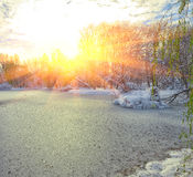 Scenic view of the frozen pond with willow tree and first snow Royalty Free Stock Photos