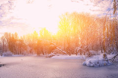 Scenic view of the frozen pond with willow tree and first snow Royalty Free Stock Photography