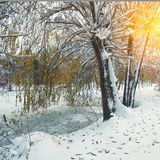 Scenic view of the frozen pond with willow tree and first snow Royalty Free Stock Photo