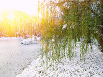 Scenic view of the frozen pond with willow tree and first snow Stock Photography