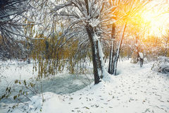 Scenic view of the frozen pond with willow tree and first snow Royalty Free Stock Images