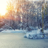 Scenic view of the frozen pond with willow tree and first snow Stock Images