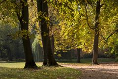 Scenic view of golden leaves on trees in Lazienki Krolewskie park in Warsaw. Poland , autumn scene Royalty Free Stock Photography