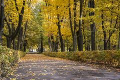 Scenic view of golden leaves on trees in Lazienki Krolewskie park in Warsaw. Poland, autumn scene Royalty Free Stock Image