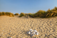 Scenic view of a golden sandy beach in the summer evening light Stock Images