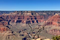 Scenic view of Grand Canyon with dead tree in forefront. Grand Canyon with dead tree in forefront stock image
