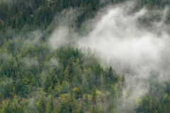 Scenic view of green pine forest high mountain in low clouds dur Stock Photography