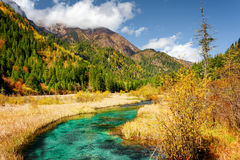 Scenic view of green river with crystal water among fall fields Royalty Free Stock Photos